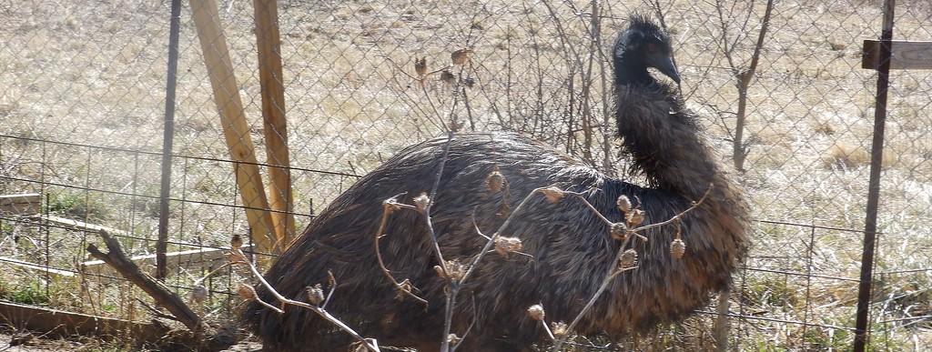 Rikki's Refuge Animal Sanctuary