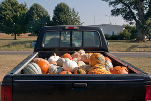 RIKKIS - Pumpkins