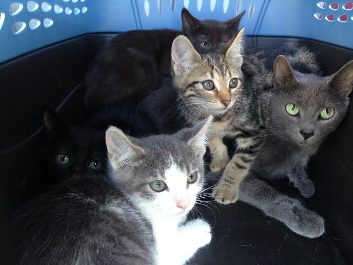 KITTENS - new batch 9-30-15 #1