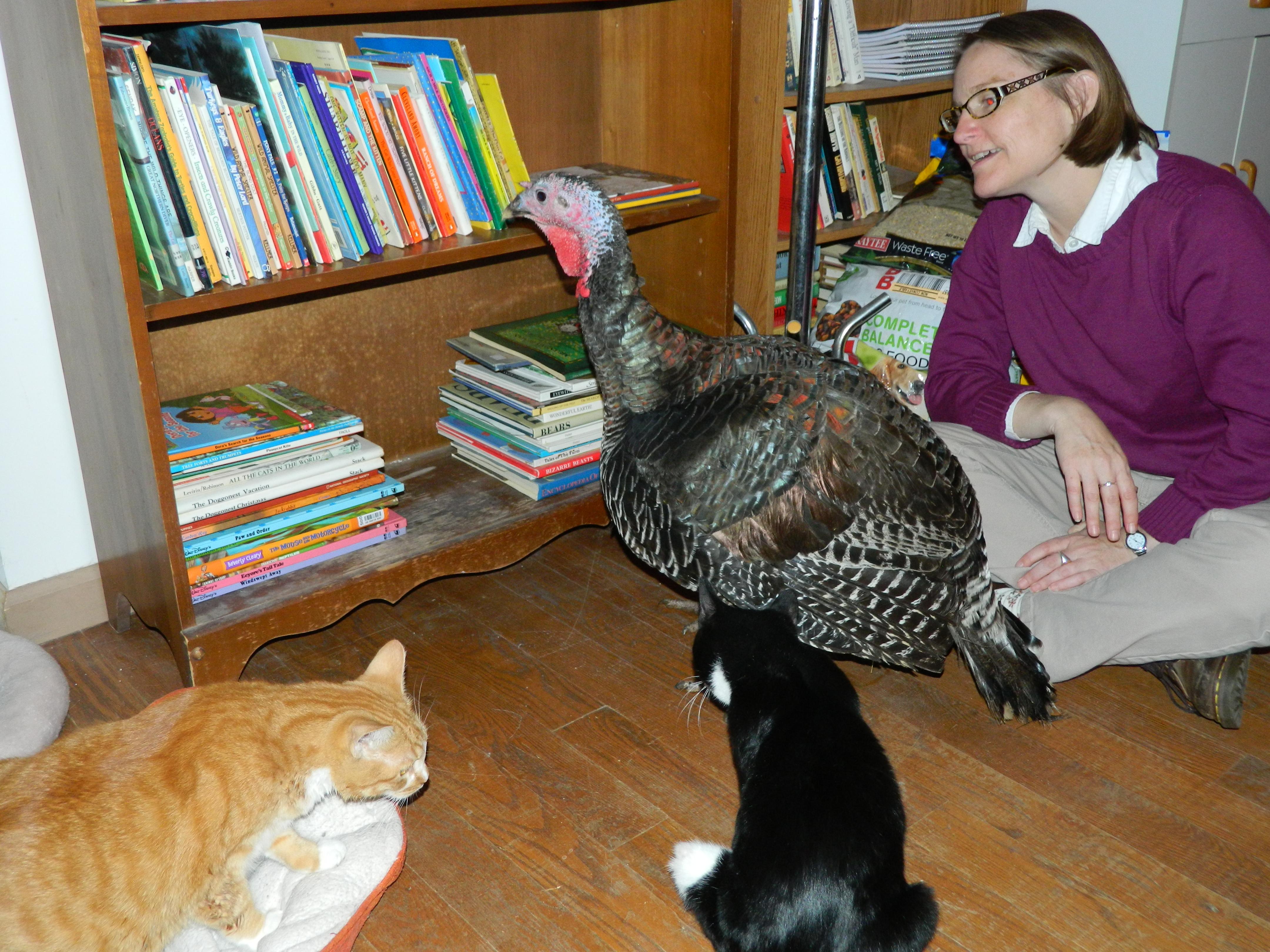 RIKKIS - Ellie Turkey Kitty LitterAture 3