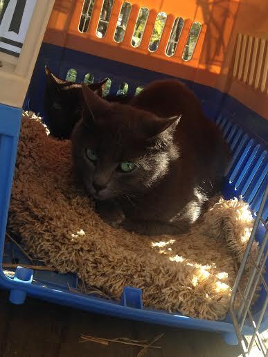feral kittens GFM update 1